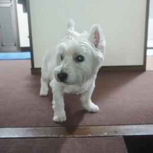 犬は訓練を受けなくても苦しんでいる飼い主を救おうとする
