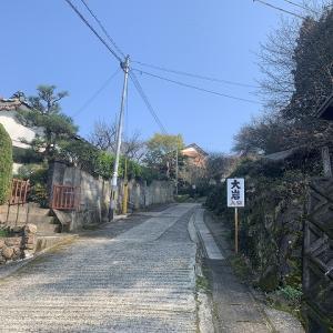 2019年 臼杵市大岩の山桜