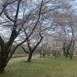 桜を求めて 2019