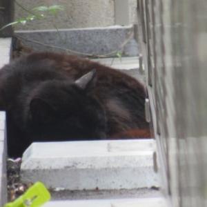 昼食待ちの黒猫