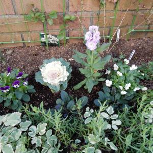 花壇の花は