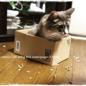 ダンボール箱を破壊したのは・・・