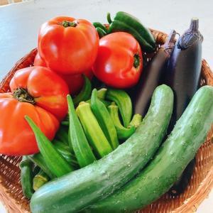 ☆夏野菜…☆