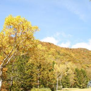 有峰森林文化村の紅葉②~今年もふたりで一緒に紅葉を♪~