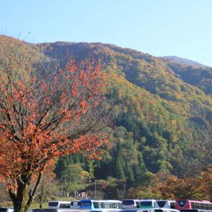秋の紅葉散策~大きな吊り橋でドッキドキ編~(岐阜県白川郷)