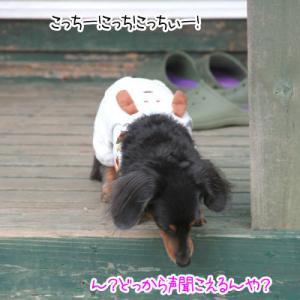ミニワンだふる日本海 福島の旅⑫~最後のビュッフェ~