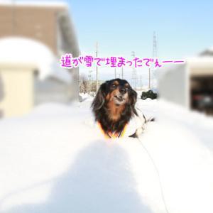 大雪が降ってから、やっとおばぁちゃんに会えたよ。