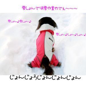 あんこ!スノードッグガードを着る!(ALPHAICON)