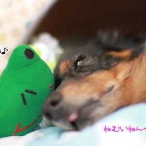 雨・・。カエルが誘うも・・夢の中。