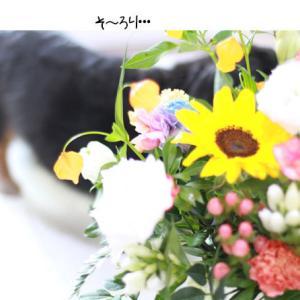 ビタミンカラーのお花に囲まれて・・。