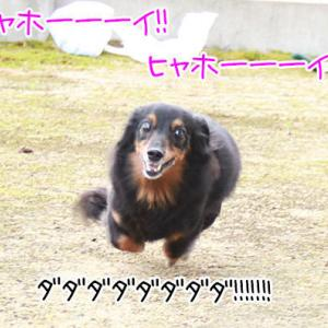 私の犬の名は・・?
