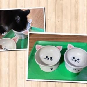 ネコ茶碗と掛け花入れ