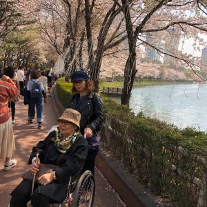 無料の日帰りバスツアー・「近江八幡と市の枝のコスモス」パート2