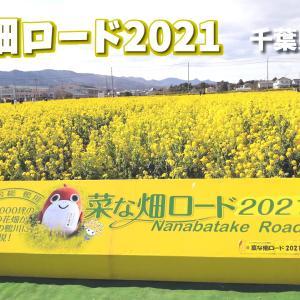 満開!!菜の畑ロード2021 千葉県鴨川市