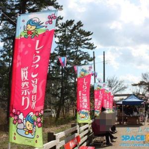 しらこ温泉桜祭り@白子町