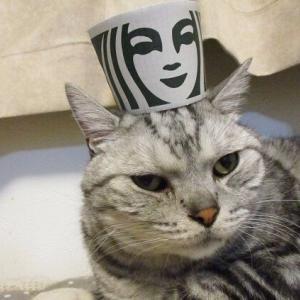 猫と人魚???