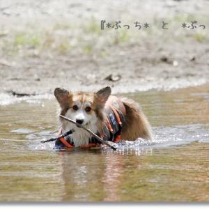 美山で川遊び♪