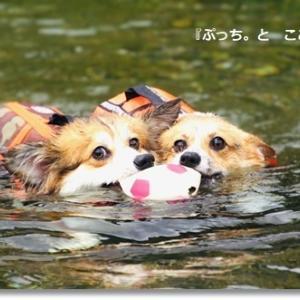 京都・*ぷっち*&ここあの夏休み♪