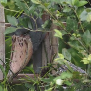 竹垣からハシビロコウ