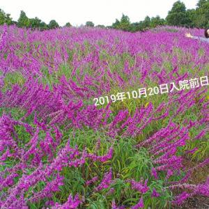 2019.10/26(土) 🍀 #入院日記 🏥🍀