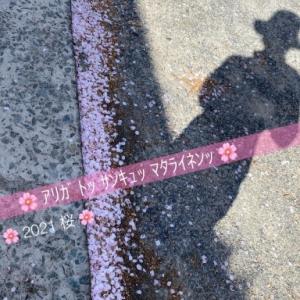 ✨🌸アリガト  サンキュ  マタライネン  2021 桜 🌸✨