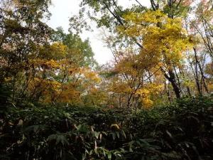 奥美濃のワンゲル部山小屋周辺の紅葉