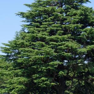 大きな木の下で(昭和記念公園4)