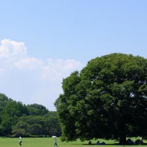 夏空の下(昭和記念公園6)