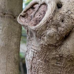 公園の木に顔が