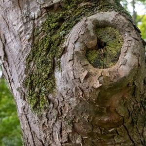 公園の木に顔が(2)