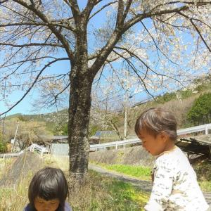 桜の下の山ほいく