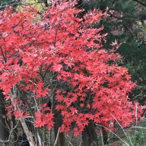 紅葉は終わっていたけれど、大山寺に