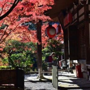 京都洛北-赤山禅院の紅葉