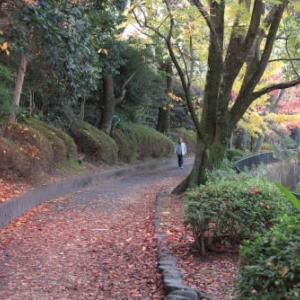 京都紅葉-真如堂