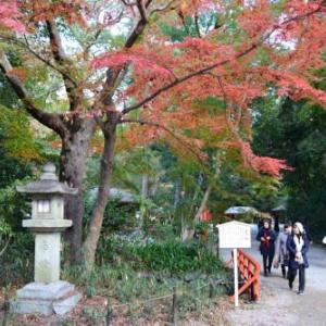 自転車で下鴨神社と寺町電気屋街