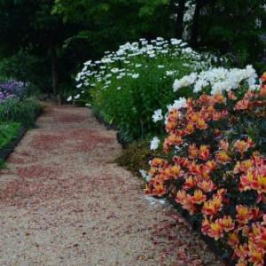 雨がやんでいる間に植物園