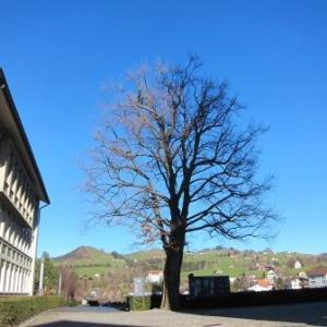 ザ・スイス!アッペンツェルの可愛い街並み