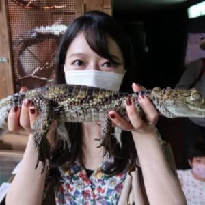 爬虫類好きです