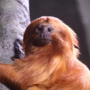 トロント動物園の動物さんたち 13