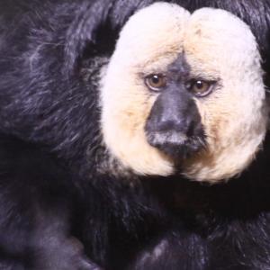 トロント動物園の動物さんたち 14