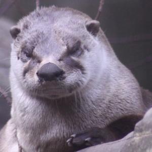 トロント動物園の動物さんたち 15