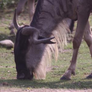 トロント動物園の動物さんたち 16