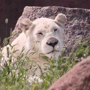 トロント動物園の動物さんたち 21
