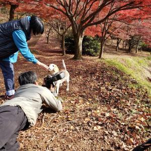 撫子、栃木で撮影♪