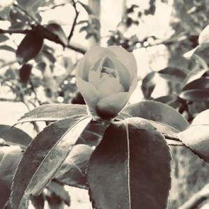 photo 11/14