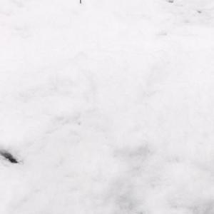 春の雪、コロナ、東京 (櫻井郁也ダンスノート3/30)