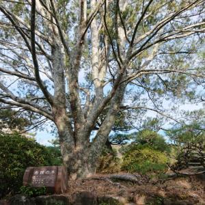市民の木 ・・・
