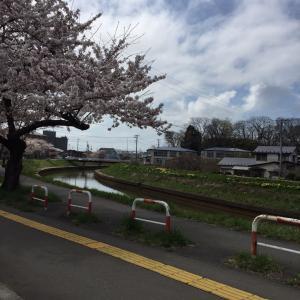 ☆桜咲きました☆