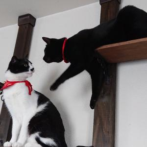 遊んでくれない兄ちゃん猫と最近の手作り