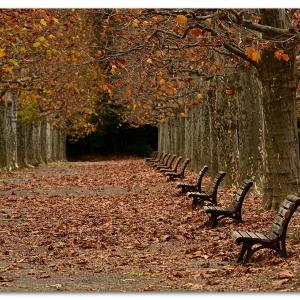 プラタナス並木のある公園